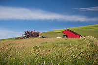 An old combine in a filed in the Palouse. The Palouse Is a region of where there are no continuous valleys, and the hills do not connect to make long ridges. These hills were not created by rivers and streams, as is most of our landscape, but formed more like sandunes, with winds depositing silt to form of some of the most fertile soil in the country.