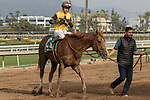 ARCADIA, CA FEBRUARY 10: #5 Kanthaka, ridden by Flavien Prat,returns to the connections after winning the San Vicente Stakes (Grade ll) on February 10, 2018 at Santa Anita Park in Arcadia, CA. (Photo by Casey Phillips/ Eclipse Sportswire/ Getty Images)