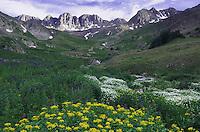 Mountains and wildflowers in alpine meadow, Arrowleaf Ragwort,Senecio triangularis,Tall Larkspur, Heartleaf Bittercress, Ouray, San Juan Mountains, Rocky Mountains, Colorado, USA, July 2007