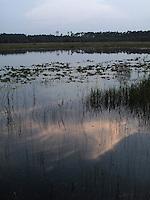 Hopkins Prairie Florida, the pond where I caught my first Alligator.