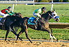 Sterlings Dolly winning at Delaware Park on 10/15/16