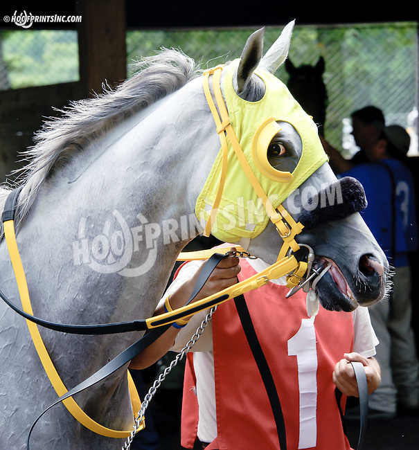 I'm the Lucky One before The Nick Shuk Memorial Stakes at Delaware Park racetrack on 7/10/14