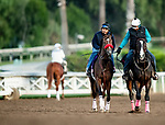 OCT 29: Breeders' Cup Juvenile Fillies entrant Comical, trained by Doug F. O'Neill, gallops at Santa Anita Park in Arcadia, California on Oct 29, 2019. Evers/Eclipse Sportswire/Breeders' Cup