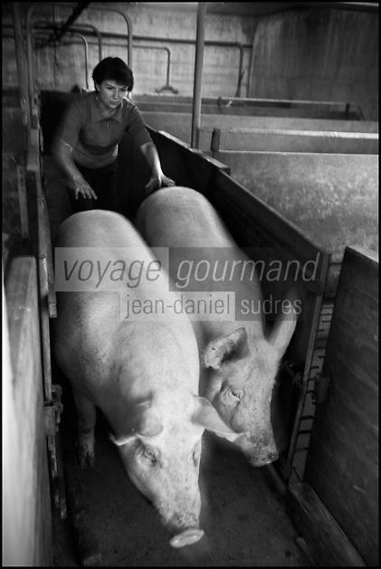 Europe/France/Midi-Pyrénées/12/Aveyron/Aubrac/La Terrisse: Anne Magne, élève des porcs pour lucien Conquet Boucher Charcutier à Laguiole [Non destiné à un usage publicitaire - Not intended for an advertising use]