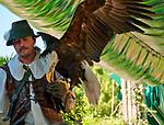 Bald Eagle at the Locarno Bird Show, Falconry Show (Falconeria Locarno)