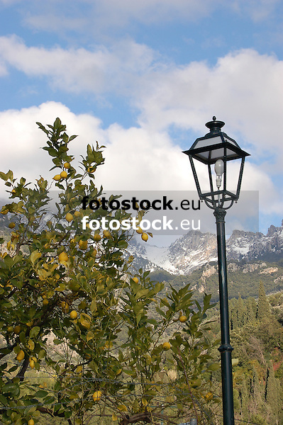 lemon tree in front of the snow covered Tramuntana mountains<br /> <br /> limonero en frente de la Tramuntana cubierta de nieve<br /> <br /> Zitronenbaum vor schneebedecktem Tramuntana-Gebirge<br /> <br /> 3008 x 2000 px<br /> 150 dpi: 50,94 x 33,87 cm<br /> 300 dpi: 25,47 x 16,93 cm
