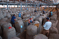 Stiching the Bales 1, Des Leswell (c), Mareeba Sales Floor, Mareeba, 2003.