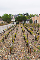 sandy gravelly soil vineyard chateau haut brion pessac leognan graves bordeaux france