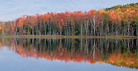 The shore of Red Jack Lake in the Hiwawatha National Forest is ablaze with color in the early morning light in autumn, Alger County, Michigan