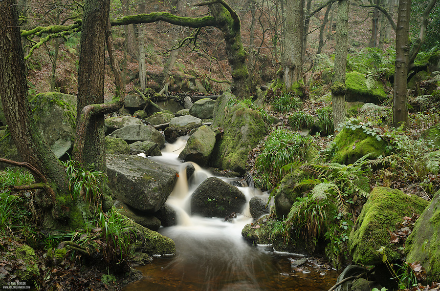 Stream & Woodland at Padley Gorge, Derbyshire