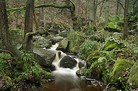 Stream & Woodland at Padley Gorge, Derbyshire