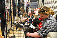 MANHATTAN ,NEW YORK, USA -JUNE 02: Volunteer at Best Friends Pet Super Adoption that held its annual adoption event bringing together more than twenty pet rescue organizations  and hundreds of dogs and cats into contact with people seeking to open their hearts & homes to an animal in need on June 2, 2017 in New York. Joana Toro/VIEW press