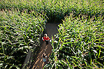 "Teenage girls in ""The Maize"" at The Pumkin Patch, Sauvie Island"