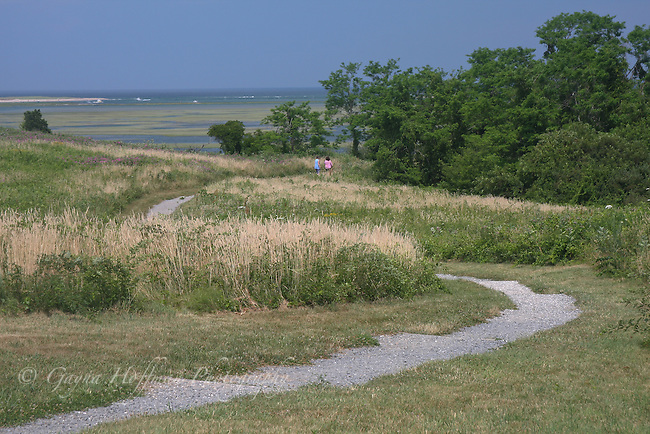 Foot path at Fort Hill, Eastham, MA