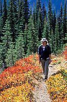 Woman hiking on trail through fall colored meadows, Mazama Ridge, Mount Rainier National Park, Lewis County, W
