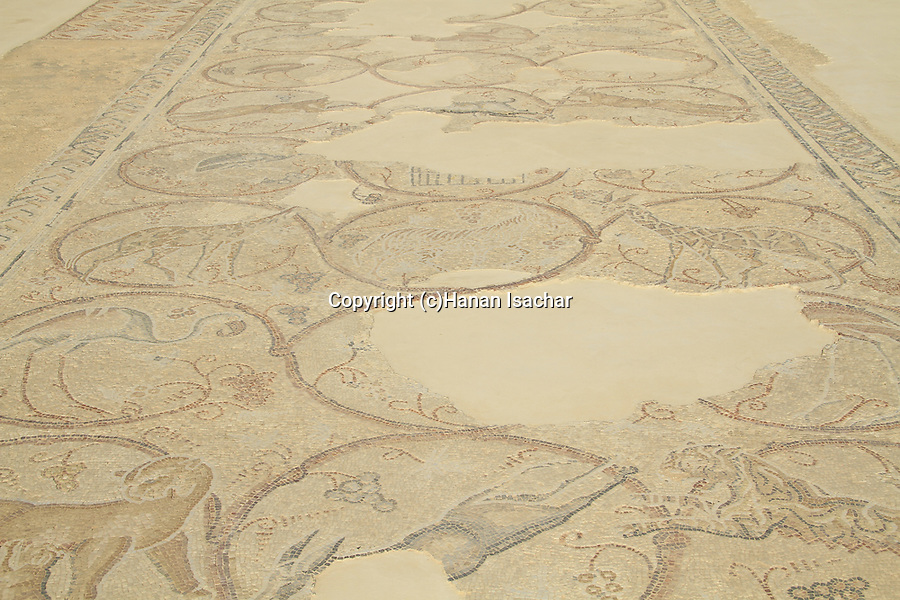 Judean Desert, the museum of the Good Samaritan, mosaic floor from the Synagogue at Gaza