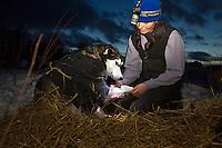 Jennifer Freking massages her dog *Gonzos* wrist on Thursday morning at Takotna during the 2008 Iditarod