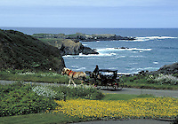 Horse and carriage with coastal headlands near Mendocino, CA.  CD scan from 35mm slide film  © John Birchard