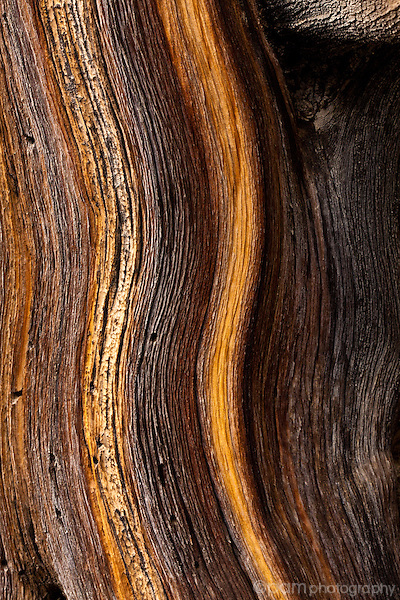 Abstract of Bristlecone pine tree trunk in California Sierras