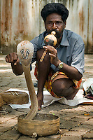 Fort Cochin, Kochi, Kerala, India, March 2008. A snake charmer controls his cobra's on the streets of Cochin. Fort Cochin was colonialised by the Portugese, Dutch and British, It was an important port for the spice trade with the west. Photo by Frits Meyst/Adventure4ever.com