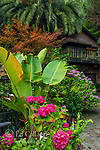 Hydrangea, Bird of Paradise, The Studio, Cypress Garden, Mill Valley, California