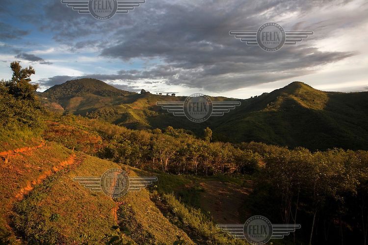 Mixed forest plantations and agri-forests are seen in Mangmei village near Mending, Yunnan Province, China.