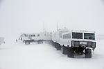 Churchill - Tundra Buggy Adventures