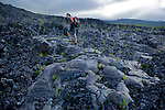 Vegetation is coming back on the2003 lava field .south of La reunion island