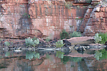 Dimond Gorge, Mornington Sanctuary, Kimberley region, Western Australia