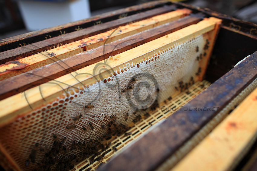 Honey flame detail.