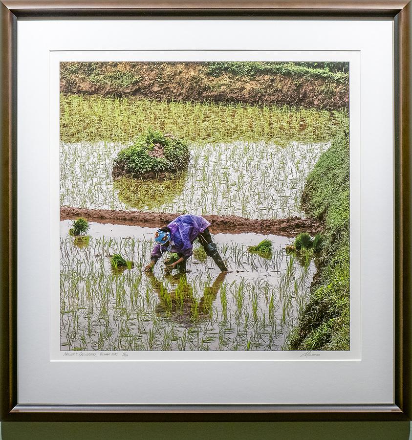 "Framed Size 22.5""h x 22""w, $600. Kona wood frame and non-glare glazing"