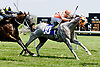 I'm The Lucky One winning at Delaware Park racetrack on 6/18/14