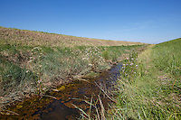 Field drain rotationally mown to increase biodiversity - Lincolnshire, September
