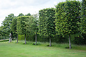 Formally trained and shaped hornbeams at Clinton Lodge, Fletching, East Sussex.