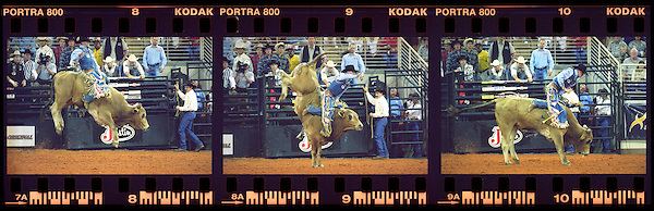 KISSIMMEE, FLORIDA : PRCA (Professional Rodeo Cowboys Association ) Extreme Bulls rodeo event. The Xtreme Bulls Series was established in 2003 by the PRCA as a way to showcase rodeos most popular event bull riding. The Xtreme Bulls makes 10 stops in 8-cities, are televised and feature the best in bull riding from the bulls to the cowboys. Kissimmee, Florida. USA