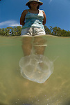 Wader with box jellyfish in shallow water, Chiropsalmus sp.