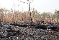 Verbrannte Erde und verbrannte Bäume im Waldgebiet nahe Mörfelden-Walldorf und dem Frankfurter Flughafen - Moerfelden-Walldorf 16.08.2020: Schadensbericht nach Waldbrand nahe Frankfurter Flughafen