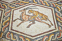 A lion hunting from the 3rd century Roman mosaic villa floor from Lod, near Tel Aviv, Israel. The Roman floor mosaic of Lod is the largest and best preserved mosaic floor from the levant region along the eastern Mediterranean coast. It is unclear whether the owners were Jewish, Christian or pagan but either way they would have been wealthy to own such a magnificent floor. The Shelby White and Leon Levy Lod Mosaic Centre, Lod, Israel.