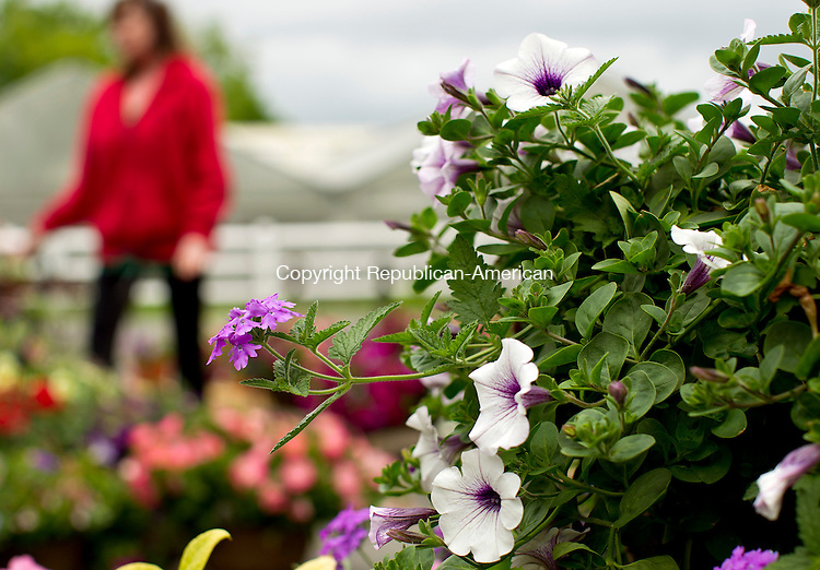 Cheshire, CT-19, May 2010-051910CM04 Perennials are seen in the foreground, while  Beverly Arisco, of Arisco Farms, shows a hanging basket to a customer Wednesday afternoon at the farm stand in Cheshire.  Arsico Farm sells a variety of plants, flowers, and produce.  The farm grows all of it's plants in greenhouses onsite.  The farm opened Easter weekend, and will remain open to the until around Thanksgiving. The family owned farm has been around since 1968, and Beverly and her husband are the third generation family owners. --Christopher Massa Republican-American