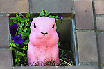 Pink Gopher at Calgary Olympic Sguare in downtown  Calgary, Alberta, Canada.