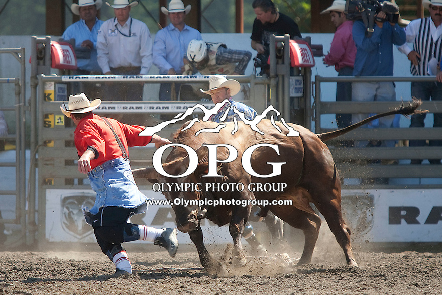 28 Aug 2011:  A rodeo bull fighter tries to get out of the way from the bull Beer Thirty during the Seminole Hard Rock Extreme Bulls held at the Kitsap County Fair and Stampede Rodeo in Bremerton, Washington.