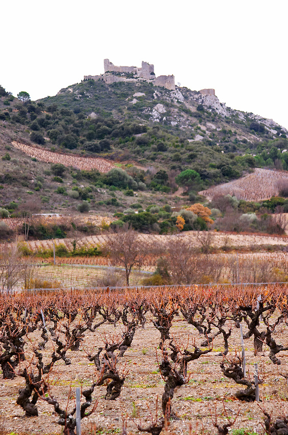 Chateau de Nouvelles. Fitou. Languedoc. The ruins of a chateau fortress. Vines trained in Gobelet pruning. The vineyard. France. Europe. Mountains and the Chateau d'Aguilar Cathar hilltop fortress dating from the 11th and 12th century in the background.