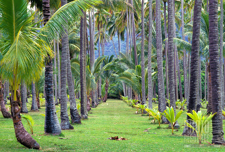 "The grounds of the Coco Palms Resort, setting for Elvis Presley film """"Blue Hawaii"