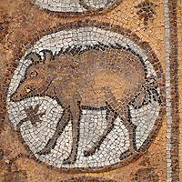Medallion mosaic of wild boar, Byzantine church, Petra, Ma'an, Jordan. Petra church was rebuilt in 450 AD over Nabatean and Roman ruins and the mosaics date from the 6th century. This boar is from the Northern Aisle. Petra was the capital and royal city of the Nabateans, Arabic desert nomads. Picture by Manuel Cohen