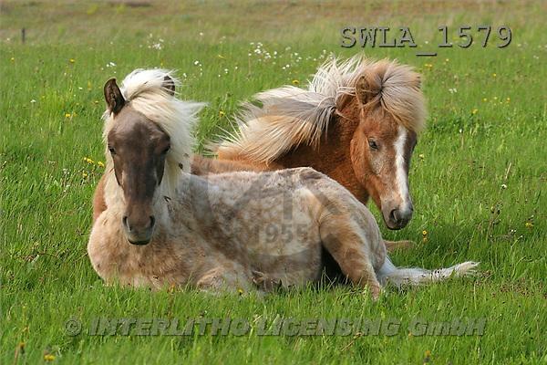Carl, ANIMALS, horses, photos(SWLA1579,#A#) Pferde, caballos