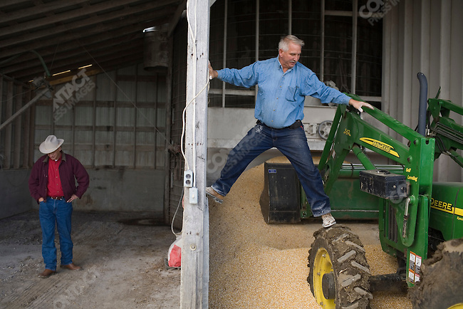 On Mike Korth's farm, located near Randolph, Nebraska. Nebraska, September 10, 2007.