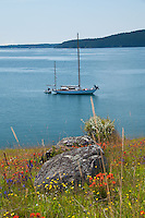 Orion at Anchor and Wildflowers of Yellow Island, San Juan Islands, Washington, US