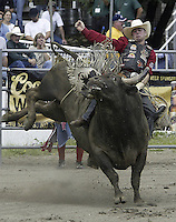 29 Aug 2004:PRCA Rodeo Bull Rider Bryan Richardson ranked 21st in the world riding the bull Can't Wait during the PRCA 2004 Extreme Bulls competition in Bremerton, WA.
