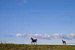 Europa, DEU, Deutschland, Nordrhein Westfalen, NRW, Rheinland, Niederrhein, Rheinberg, Orsoyer Rheinbogen, Pferde auf dem Rheindeich, Kategorien und Themen, Tiere, Haustiere, Nutztiere, Landwirtschaft, Agrar, Agrarwirtschaft, Wetter, Wetterelemente, Wetterlage, Wetterkunde, Witterung, Witterungsbedingungen, Wettererscheinungen, Meteorologie, Wettervorhersage....[Fuer die Nutzung gelten die jeweils gueltigen Allgemeinen Liefer-und Geschaeftsbedingungen. Nutzung nur gegen Verwendungsmeldung und Nachweis. Download der AGB unter http://www.image-box.com oder werden auf Anfrage zugesendet. Freigabe ist vorher erforderlich. Jede Nutzung des Fotos ist honorarpflichtig gemaess derzeit gueltiger MFM Liste - Kontakt, Uwe Schmid-Fotografie, Duisburg, Tel. (+49).2065.677997, ..archiv@image-box.com, www.image-box.com]