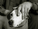 A man stroking the head of a white dog.<br />